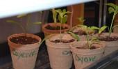 Pepper Pots